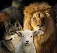 wolf_lion_and_lamb