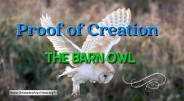 Proof of a Creation: The Barn Owl